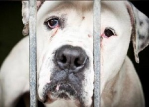 animal-cruelty10