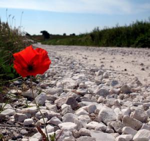 fiore resistenza